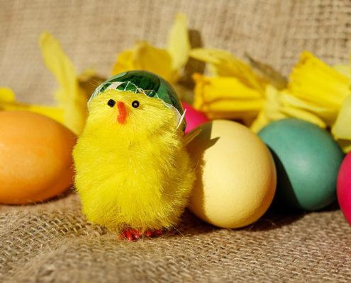 Egg Theme Ideas
