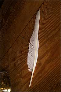 An image of a white feather on a dark wood background.