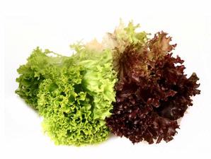 A picture of green and purple lettuce.