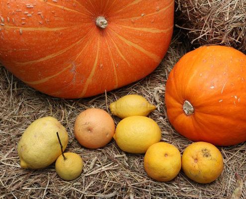 Autumn Pumpkin Theme
