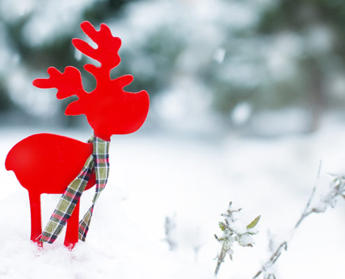 Reindeer Theme for Kids