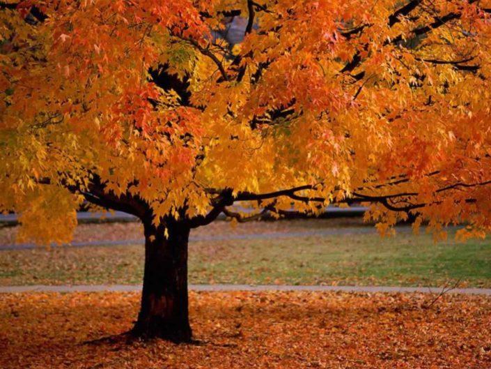 Kid activities seasonal fall autumn art crafts