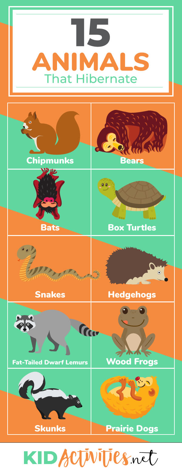 A list of animals that hibernate in the winter. Get information on the animals and how they prepare for their winter hibernation and what that entails.