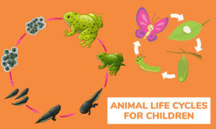A collection of animal life cycle lesson for children. Great for science class.