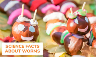A collection of science facts about worms. Great for a worm themed day.