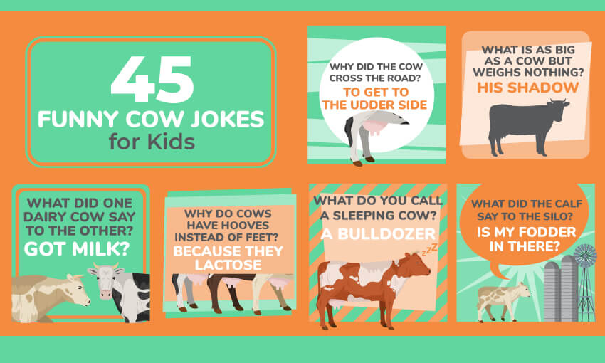 A collection of cow jokes for kids.