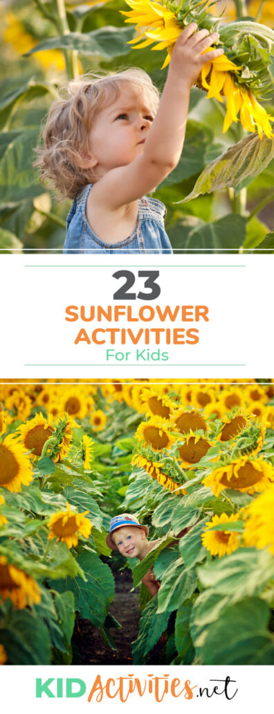 A collection of sunflower activities for kids. Great for getting kids interacting and learning about sunflowers. Great for a sunflower themed day at school.