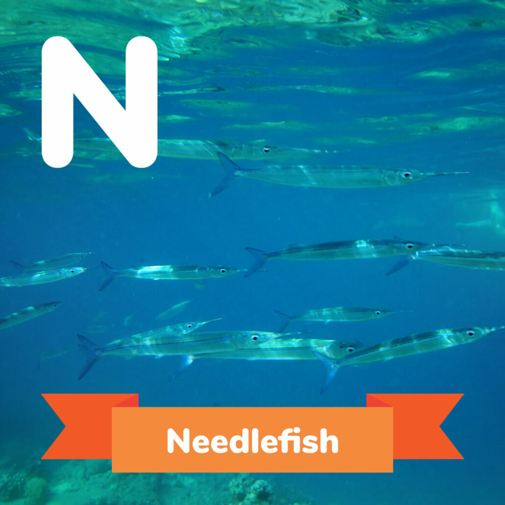 A picture of the Needlefish.
