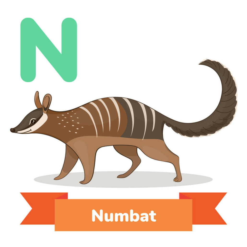 A picture of the numbat.