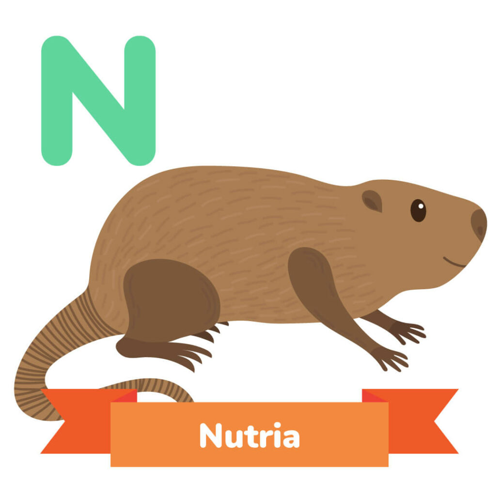 A picture of the nutria.