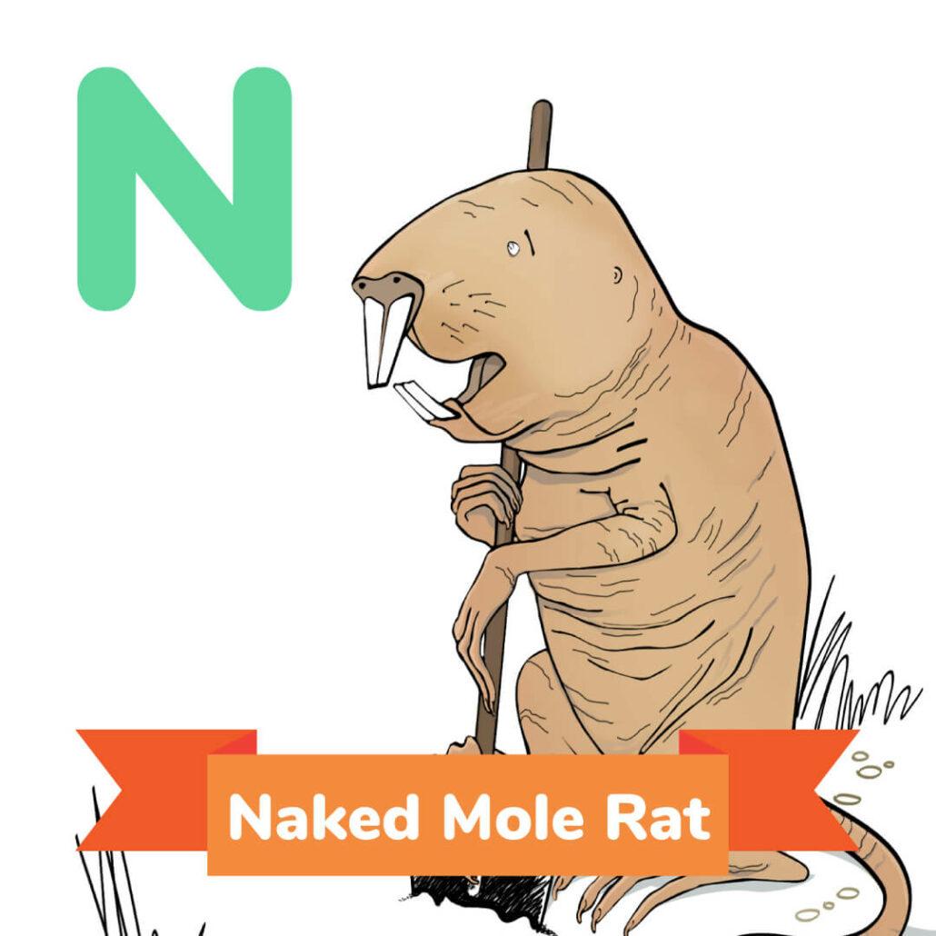 Secrets Of Naked Mole