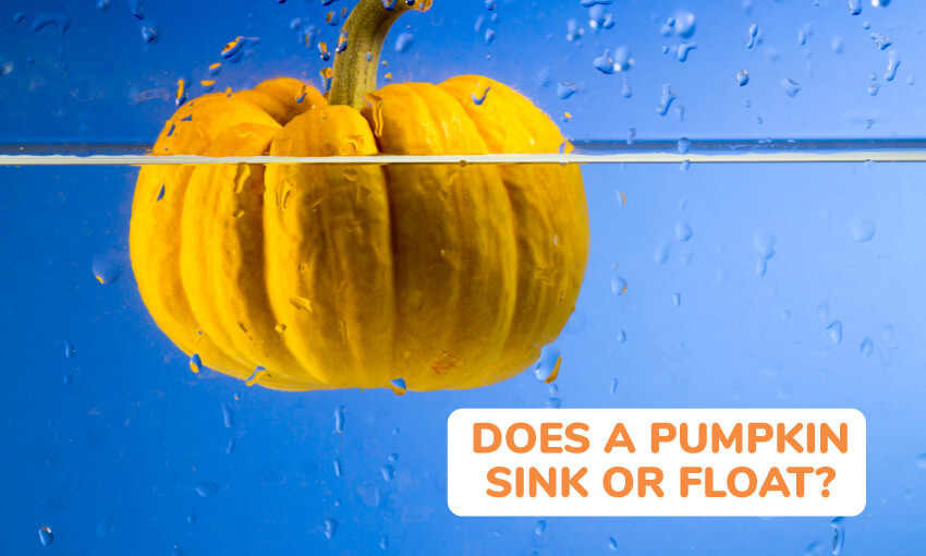 Does a pumpkin sink or float?