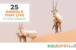 A collection of animals that live in the desert