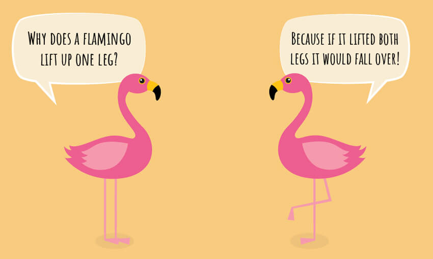 "An animated picture of flamingos with the joke ""why does a flamingo lift up one leg?"