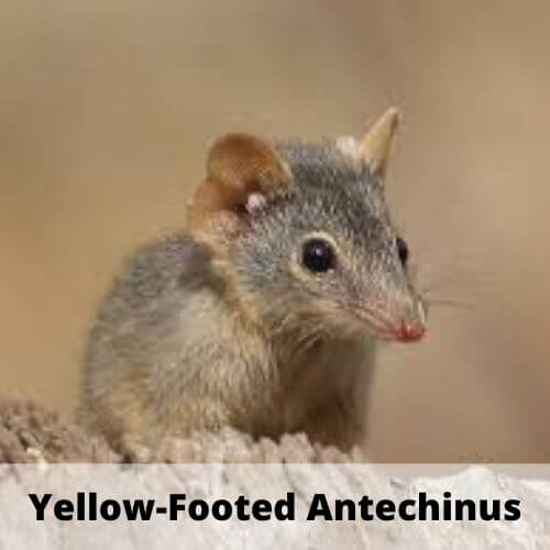 animals which names start with Y