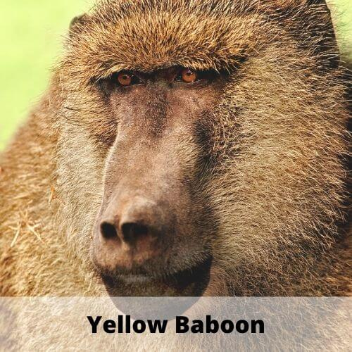 animals with names like y