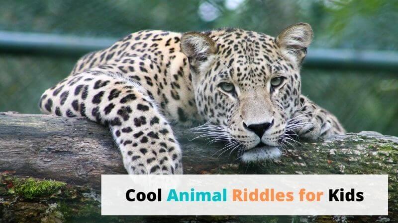 animal riddles for kids